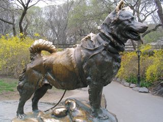 Close sculpted balto