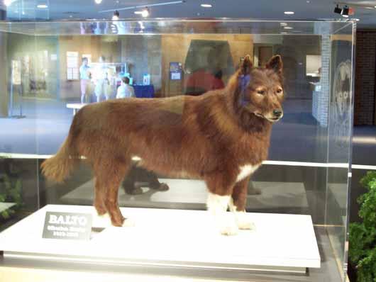 Stuffed balto cleveland museum