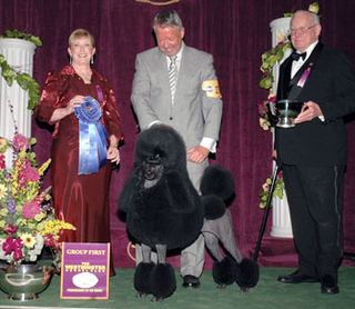 Day one standard poodle
