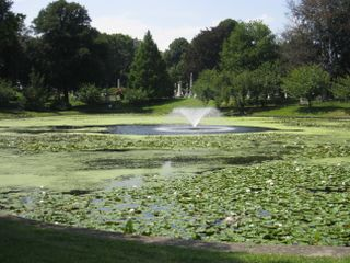 Lake at green-wood